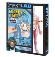 SmartLab Explore It Human Body Model