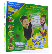 Live Butterfly Garden Hatching Kit