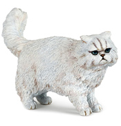 Persian Cat, White