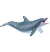 Dolphin, Playing