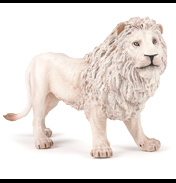 Large White Male Lion
