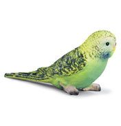 Budgie Green