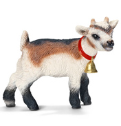 Domestic Goat, Kid