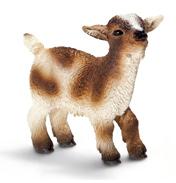 Dwarf Goat Kid