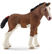Clydesdale Foal