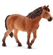 Dartmoor Pony Mare