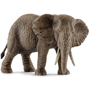 African Elephant, Female
