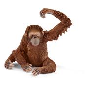 Orangutan, Female